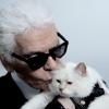 シャネルデザイナーもメロメロ!世界一のセレブ猫♥カール・ラガーシュペット